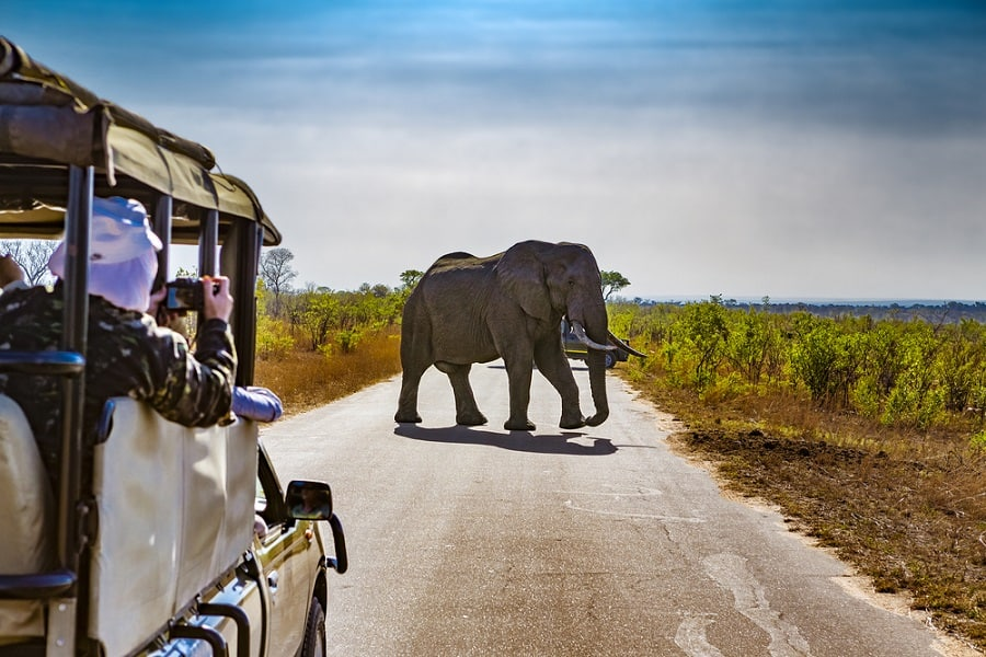 Tips for Booking a Safari on an Africa Cruise with Norwegian