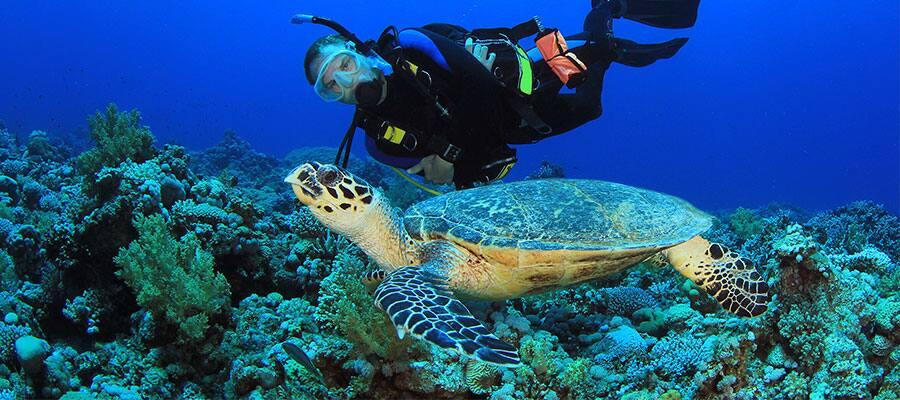 Snorkel on Caribbean cruises